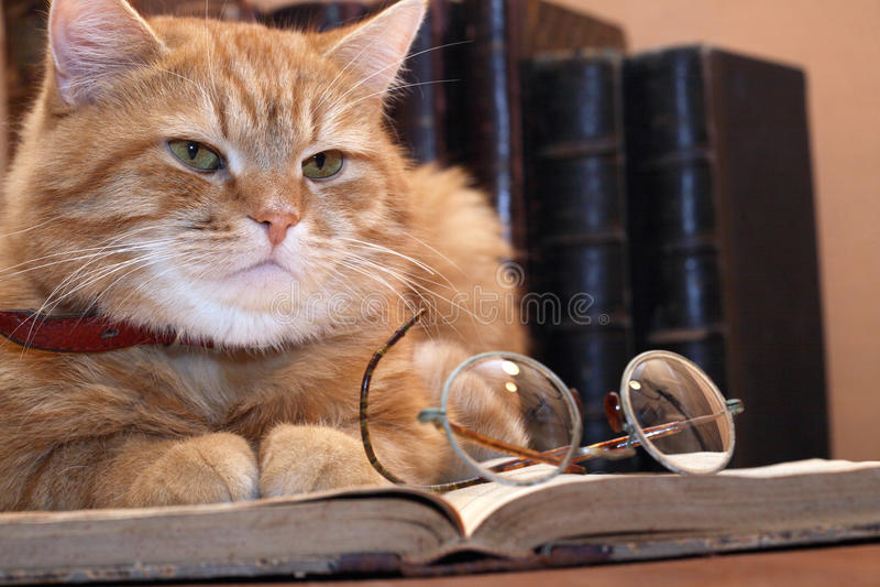 Download Clever Cat stock photo. Image of bookshelf, look, eyeglasses - 16644578