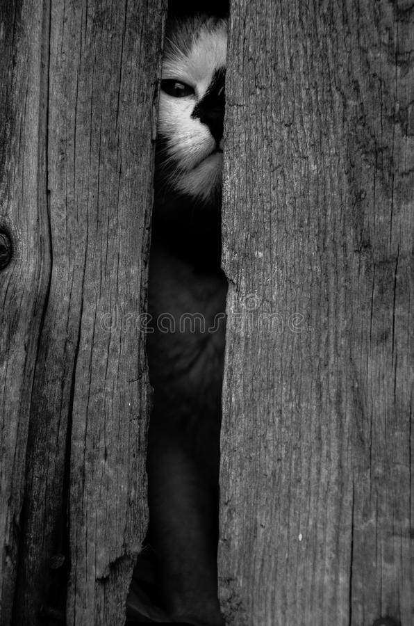 Clever cat (black-and-white photo) stock images
