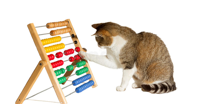 Clever cat mathematician stock photo
