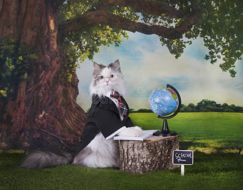Clever cat under the oak holds a geography lesson.  stock photos