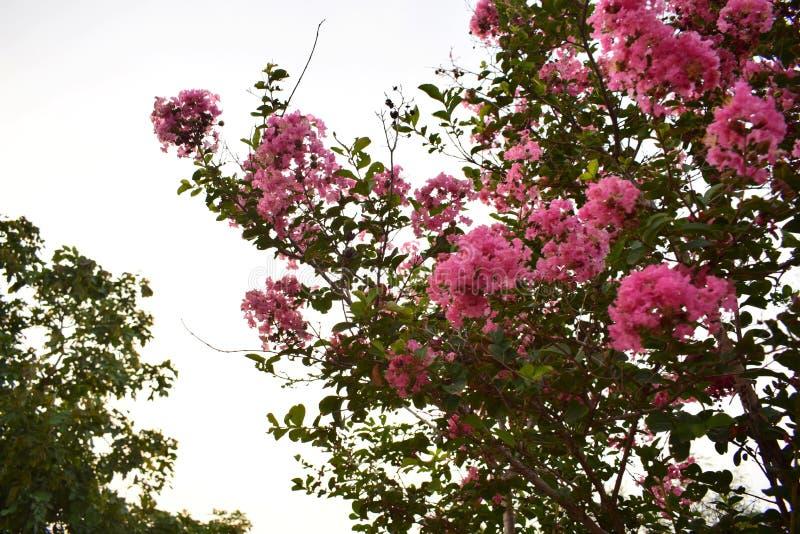Clic de fleurs photographie stock