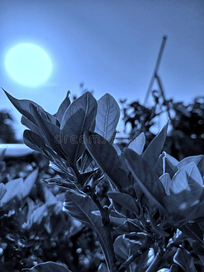 Clic de Nightmode et édition de la beauté de nature photographie stock