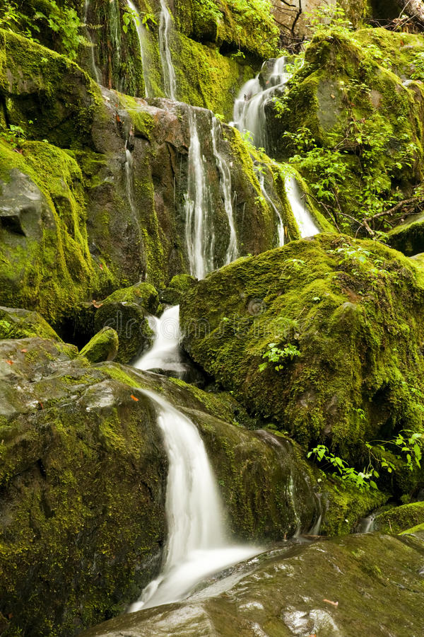 Download Cliff Branch Falls, Great Smoky Mtns NP, TN Stock Photo - Image: 14859964