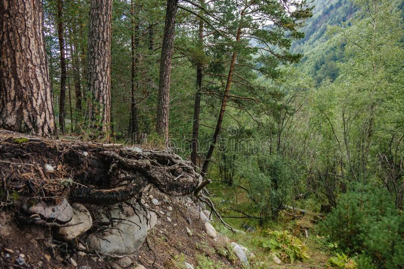 Cliff in a dense forest in a mountainous area stock photography