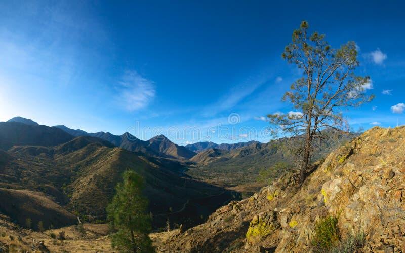 Download Cliff Edge Tree fotografia stock. Immagine di parco, sequoia - 30828784