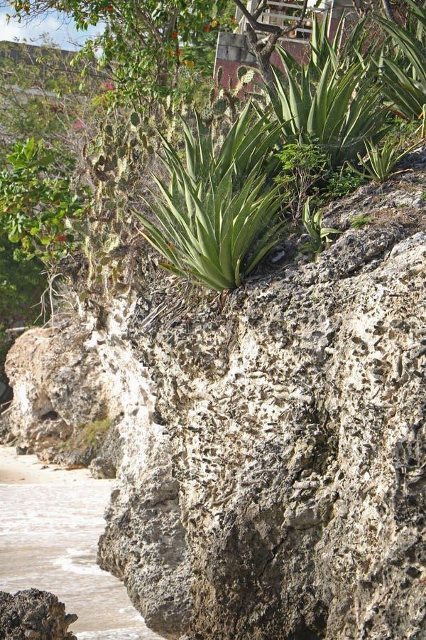 Cliff Side Garden stock fotografie