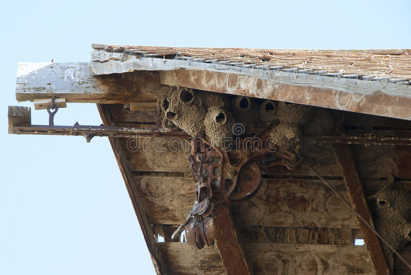Cliff Swallow Nest photographie stock