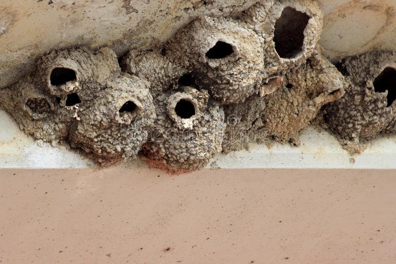 Cliff swallow nests made of mud under a bridge overhang stock photography