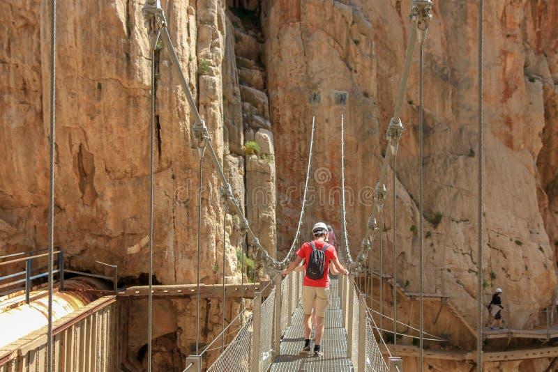 Cliffes que cruzan por un puente de colgante con los calbes foto de archivo