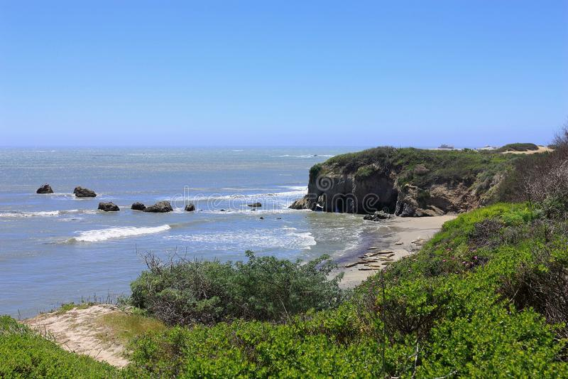 Cliffs and Beaches with Elephant Seals on the Pacific Coast at Ano Nuevo Bay, Ano Nuevo State Park, Big Sur, California, USA. Female and juvenile elephant seals royalty free stock photography