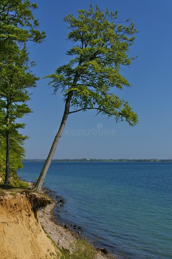 Clifftop mit Wald und schräg gelegenem Baum über dem Strand stockbild