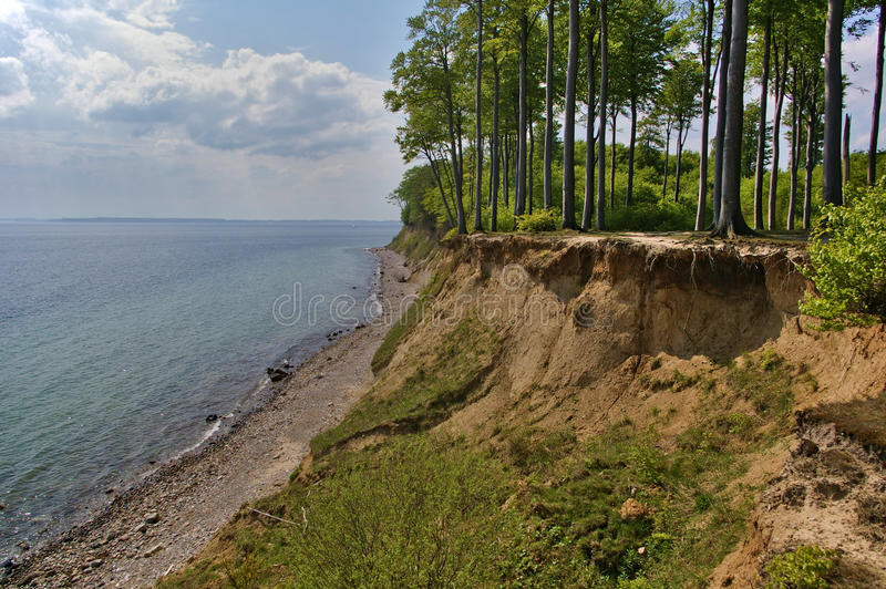 Clifftop z lasem nad plaża fotografia stock