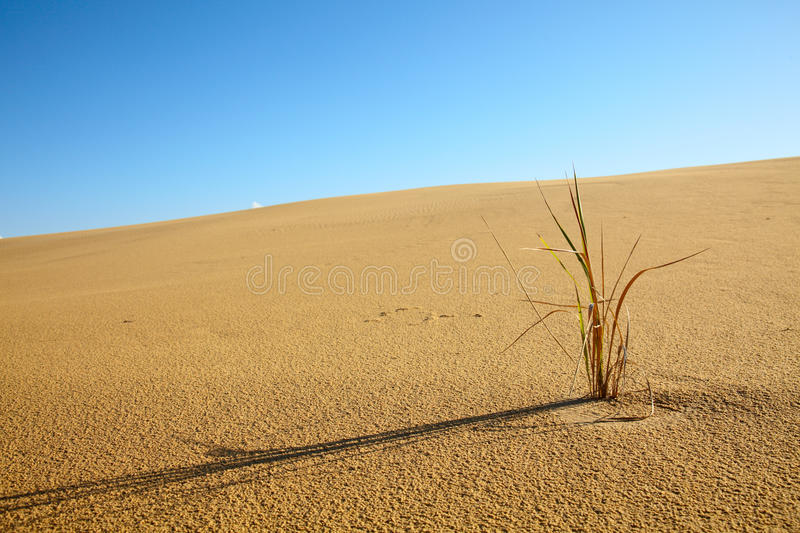 Climate change royalty free stock photography