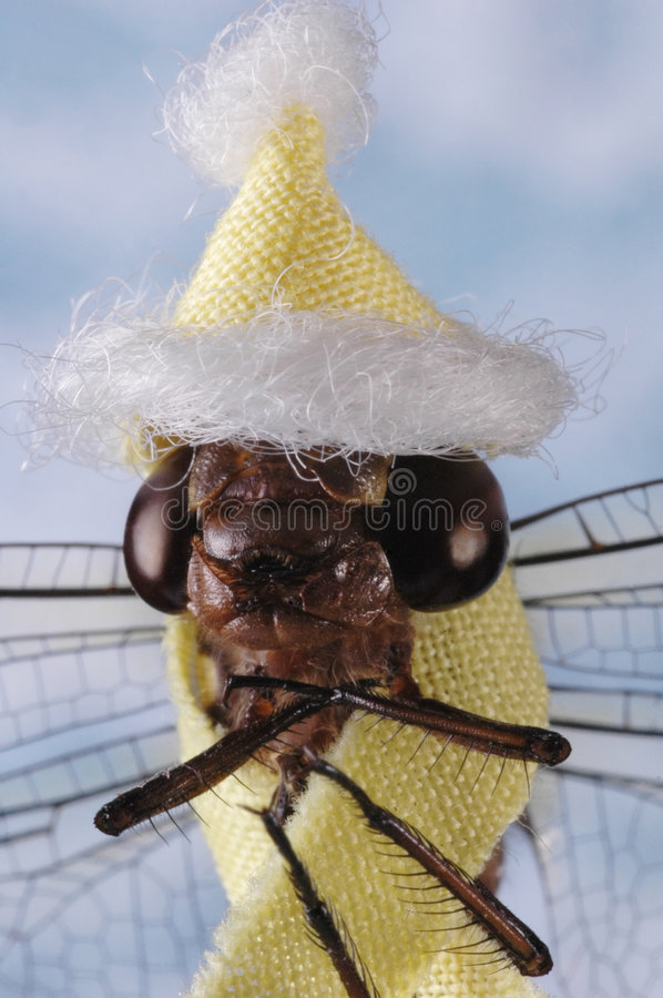 Climate Change - Dragon Fly royalty free stock photography