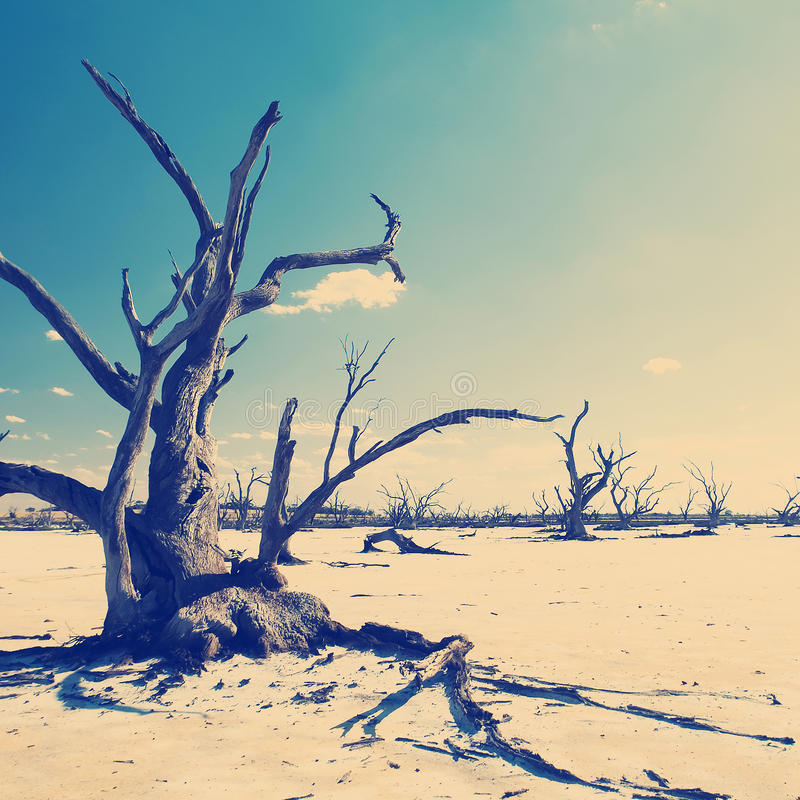 Climate Change Instagram Style. Dead tree trunks and limbs on a salt lake under blue sky for climate change concept stock image