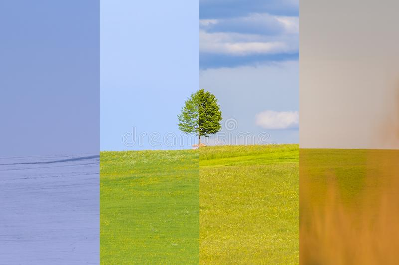 Climate change winter spring summer fall time over the year. Nature weather visual with a single tree on a hill. Cold snow and a juicy green meadows have a stock image