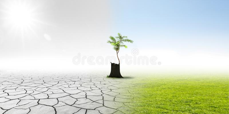 Climate changing. In landscape with litte pine royalty free stock photos