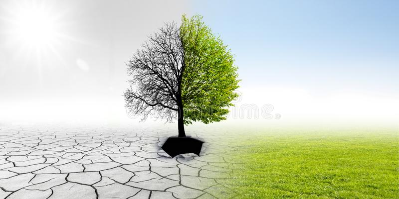 Climate changing. In landscape with tree royalty free stock photography