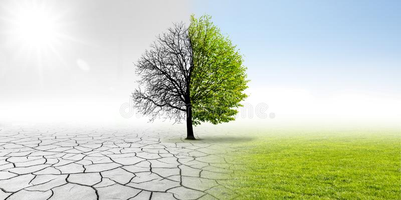 Climate changing. In landscape with tree stock photos