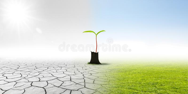 Climate changing. With little sapling royalty free stock image