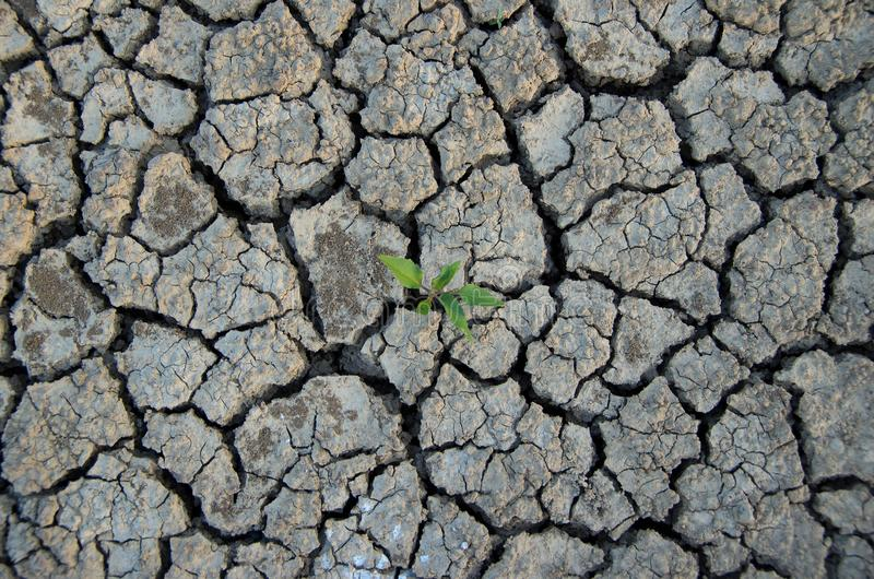 Climatic changes. Dry cracked earth with plant struggling for life. royalty free stock image