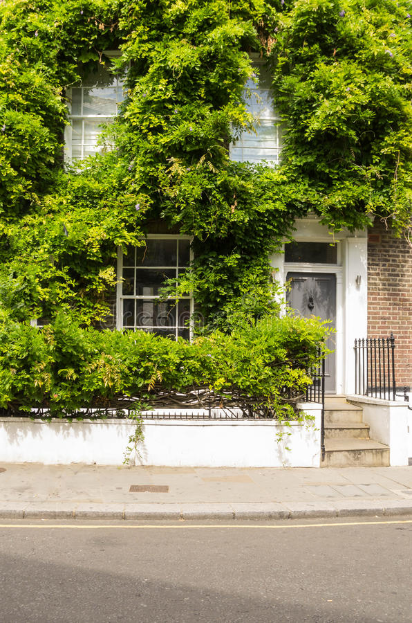 Climbers. 0Facade of an old English house, lots of ivy and vines stock images