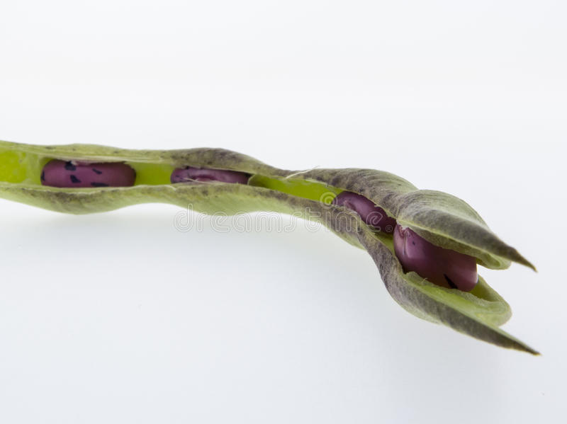 Climbing beans, fire beans on white background stock images