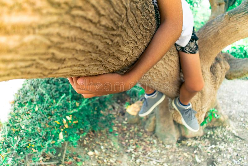 Climbing. A child climbing a tree royalty free stock image