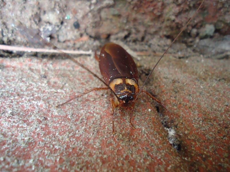 Climbing Cockroach royalty free stock photo