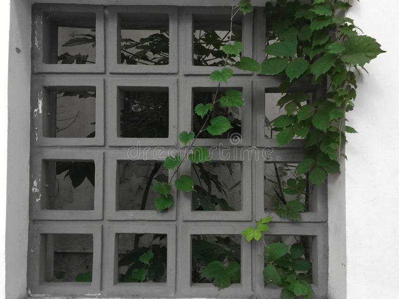 Decorative window stock images