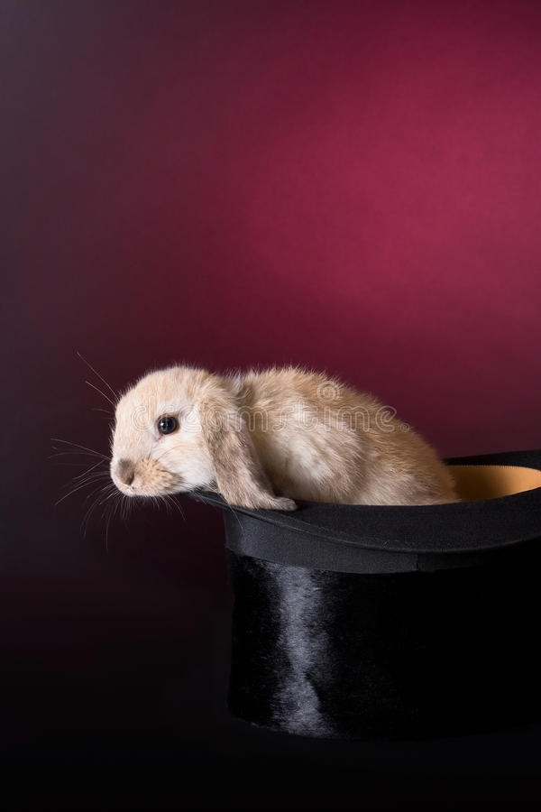 Climbing out. Little easter rabbit climbing out of a magician's hat stock photography