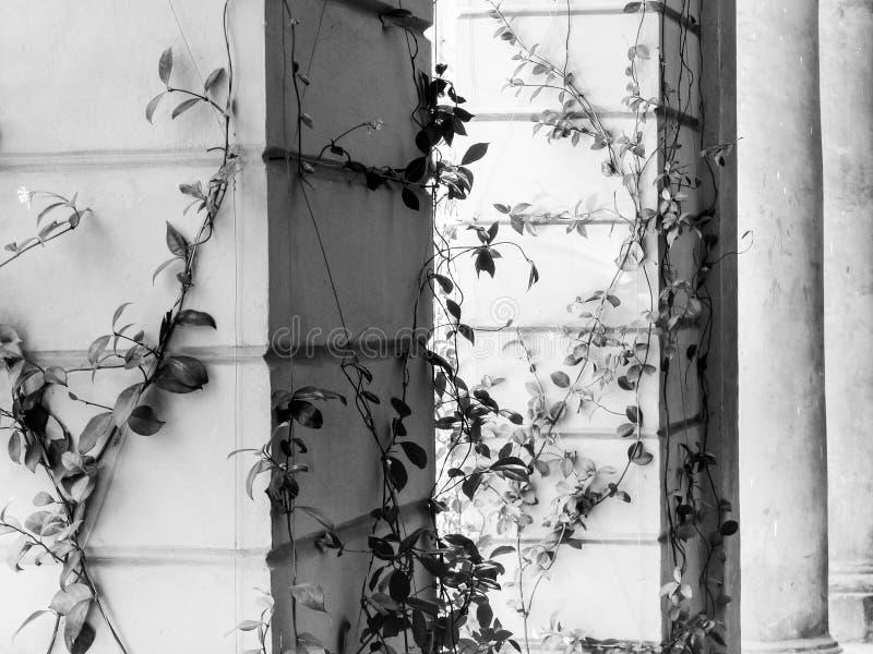 Climbing plants royalty free stock photos