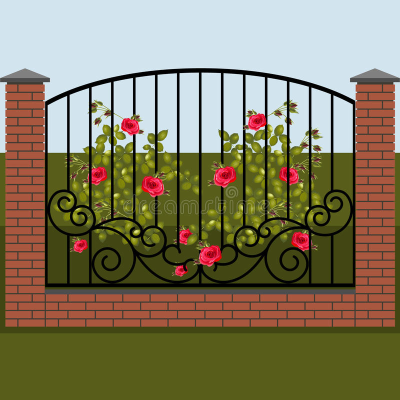 Climbing rose on a background of wrought fence vector illustration