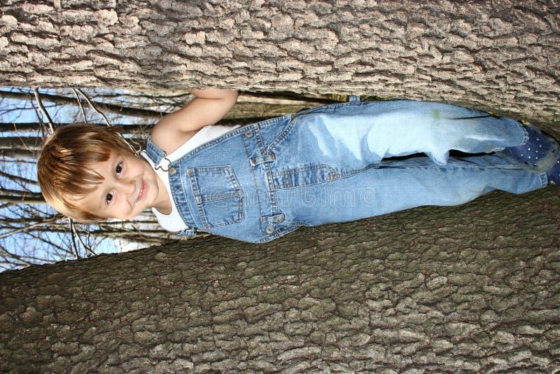 Download Climbing Trees Stock Image - Image: 2210021