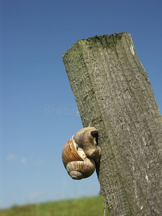 Download Climbing up stock image. Image of stake, spiral, slow, shell - 231063