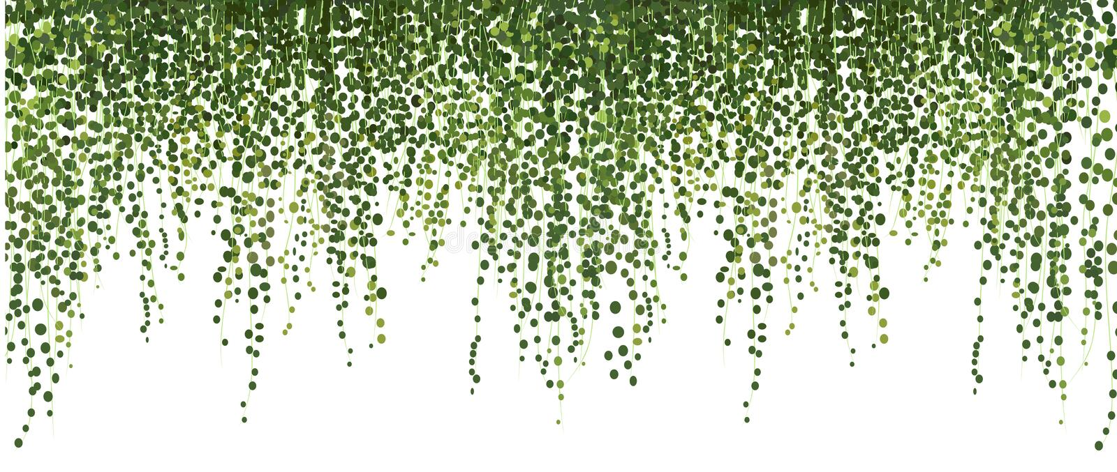 Climbing wall of ivy. vector illustration on white background. banner and web background. stock illustration