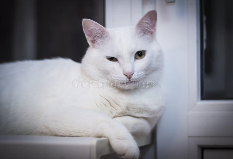 Clins d'oeil blancs de chat à la fenêtre de nuit photographie stock libre de droits