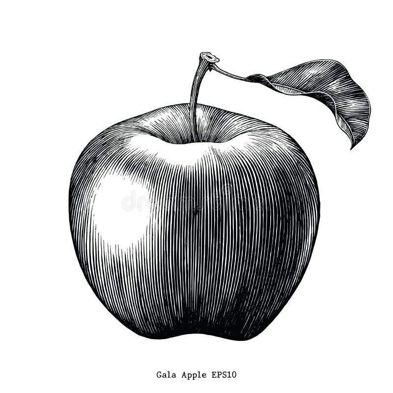 Clip art del vintage del dibujo de la fruta de la manzana de la gala aislado en la parte posterior del blanco stock de ilustración