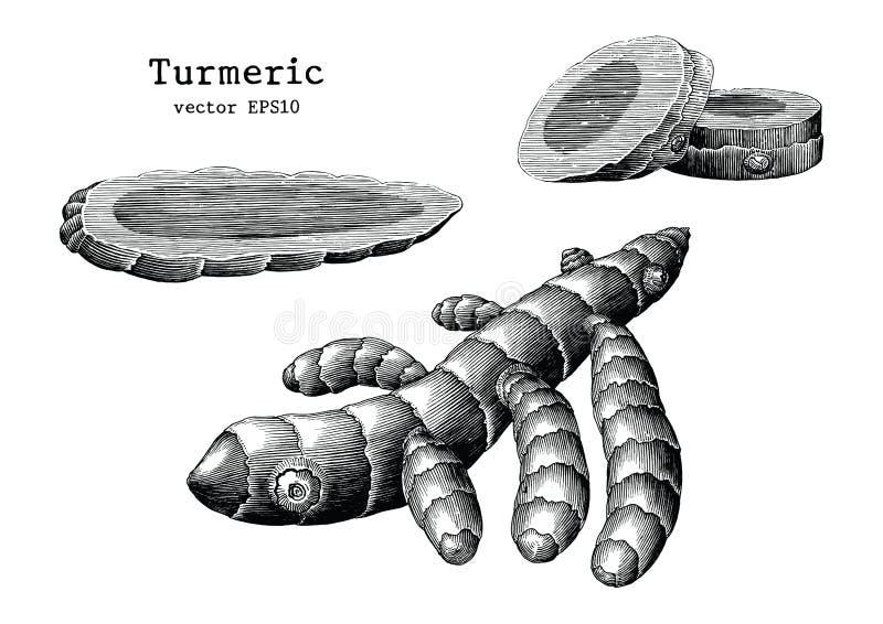 Clip art del vintage del drenaje de la mano de la colección de la raíz de cúrcuma aislado encendido libre illustration