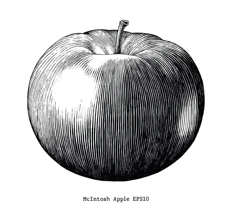 Clip art del vintage del drenaje de la mano de la manzana de Mcintosh aislado en la parte posterior del blanco ilustración del vector