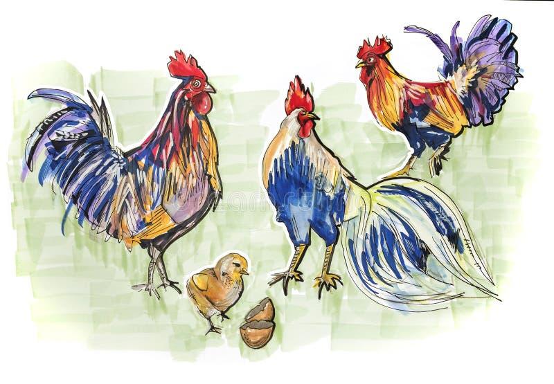 Clip art dibujado mano de gallos stock de ilustración