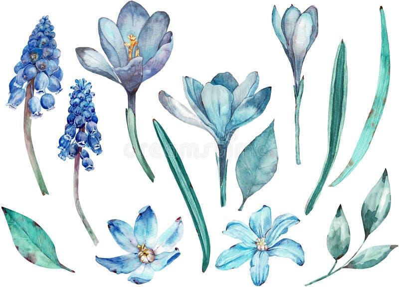 Clipart blu dei fiori della molla Elementi separati dell'acquerello dei fiori e delle foglie isolati su fondo bianco illustrazione vettoriale