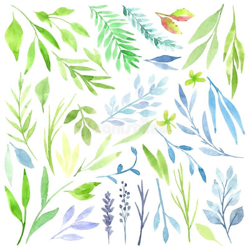 Clipart botânico Grupo de folhas, de ervas e de ramos verdes Elementos do projeto gráfico Aperfeiçoe para convites do casamento ilustração do vetor