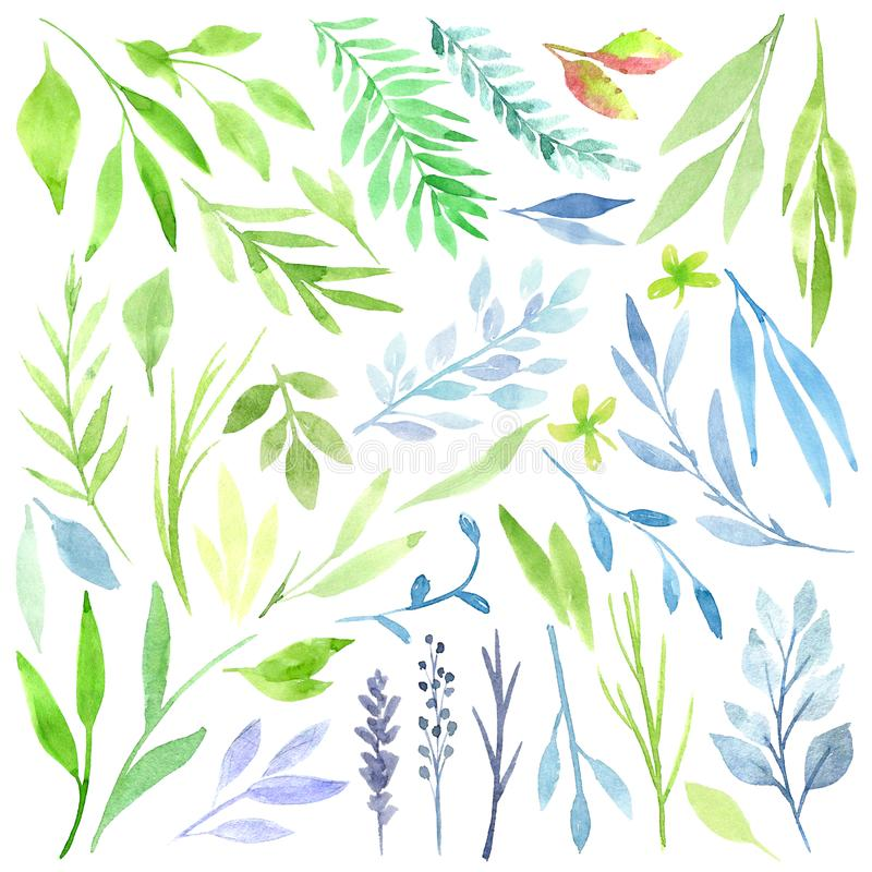 Clipart botanique Ensemble de feuilles, d'herbes et de branches vertes Éléments de conception graphique Perfectionnez pour épouse illustration de vecteur
