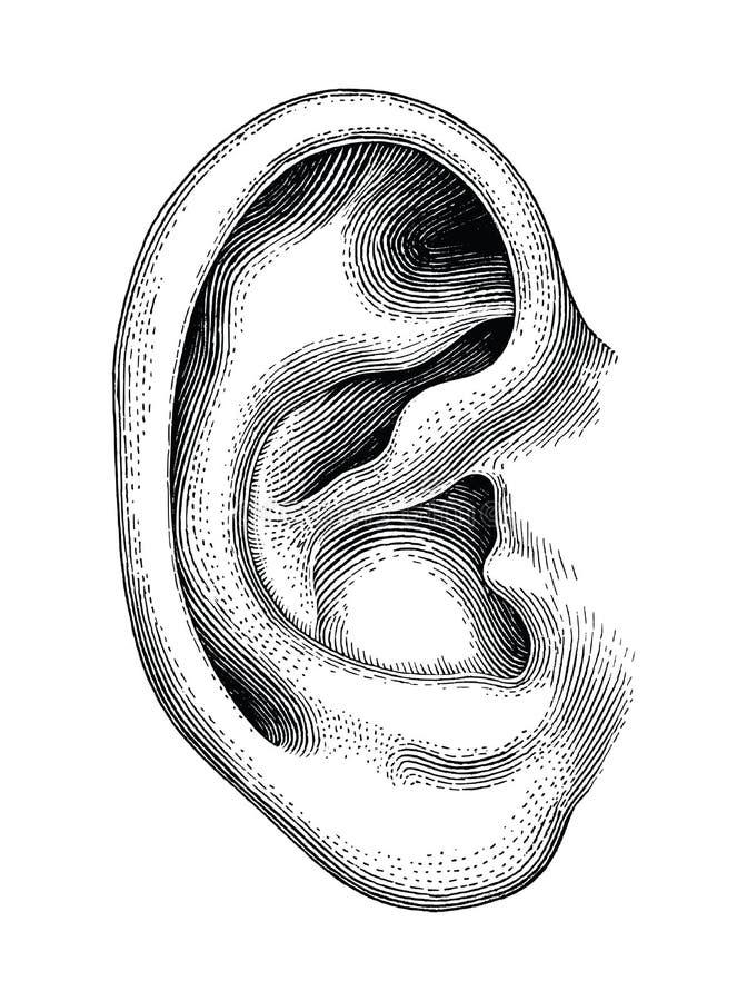 Clipart d'annata dell'orecchio di tiraggio umano della mano isolato su backgroun bianco royalty illustrazione gratis
