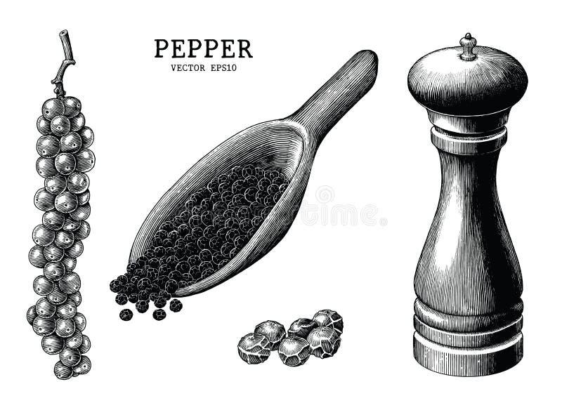 Clipart d'annata di tiraggio della mano della raccolta del pepe isolato sulla b bianca illustrazione di stock