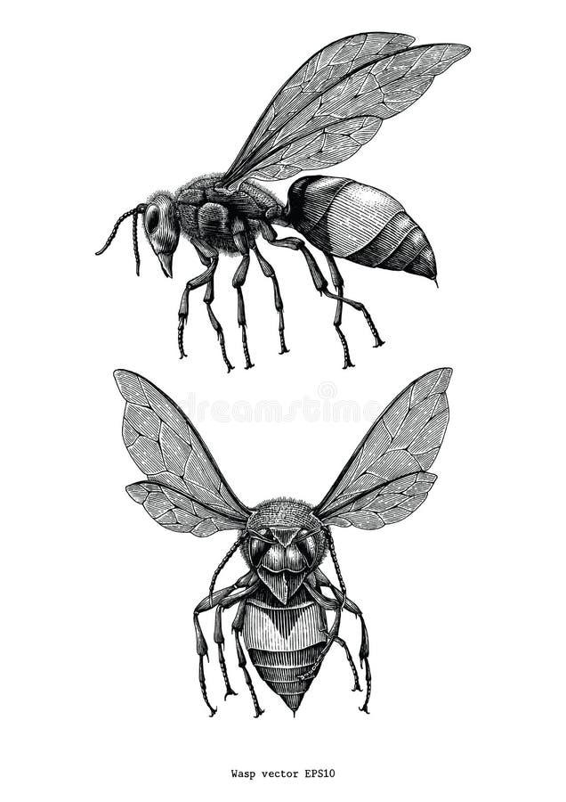 Clipart d'annata di tiraggio della mano della vespa isolato su fondo bianco illustrazione di stock