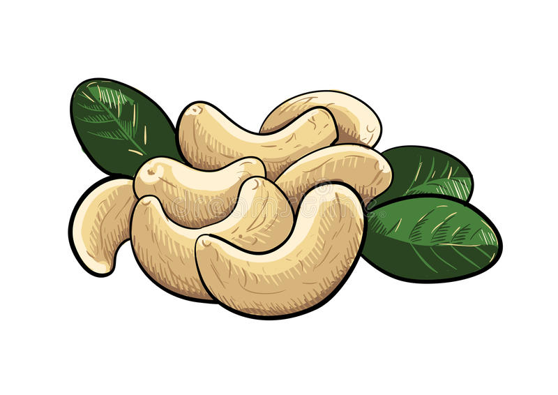 Clipart de noix de cajou de vecteur illustration de vecteur