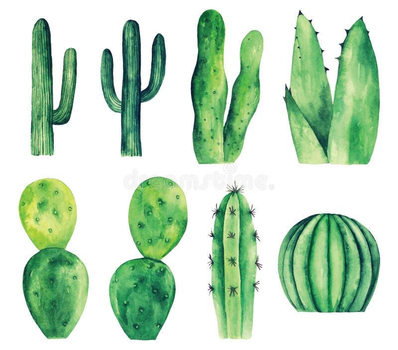 Clipart do vetor do cacto da aquarela Cactos verdes ilustração stock
