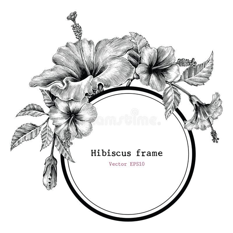 Clipart do vintage do desenho da mão do quadro da flor do hibiscus ilustração royalty free
